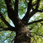 Tree Work on Middle Urbana Road